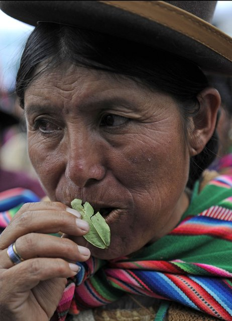 """An Aymara indigenous woman chews coca leaves during a celebration for the reincorporation of Bolivia to the UN Convention Against Illicit Traffic in Narcotic Drugs in La Paz on January 14, 2013. """"The coca leaf is not any more seen as cocaine (..), it is a victory of our identity"""" said Bolivian President Evo Morales. AFP PHOTO/Jorge Bernal        (Photo credit should read JORGE BERNAL/AFP/Getty Images)"""