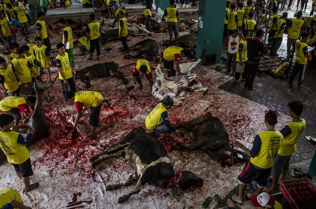 Cows are slaughtered during celebrations for Eid al-Adha at Jogokaryan mosque on September 12, 2016 in Yogyakarta, Indonesia. (Photo by Ulet Ifansasti/Getty Images)