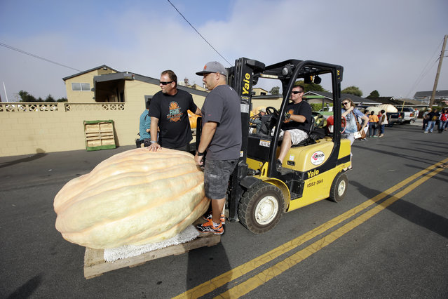 A giant pumpkin is fork lifted to the weigh-in area at the Annual Safeway World Championship Pumpkin Weigh-Off Monday, October 12, 2015, in Half Moon Bay, Calif. (Photo by Marcio Jose Sanchez/AP Photo)