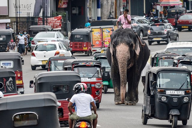 A mahout rides an elephant among the traffic down a street in Piliyandala, a suburb of Sri Lanka's capital Colombo on September 27, 2020. (Photo by Lakruwan Wanniarachchi/AFP Photo)