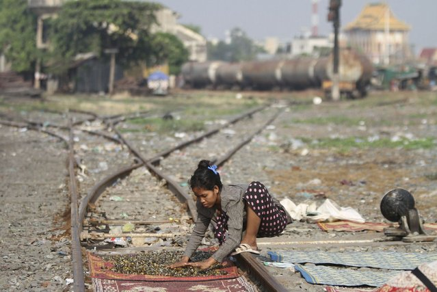 A woman dries freshwater clams for sale on a railway track in Phnom Penh, Cambodia, on March 19, 2013. (Photo by Samrang Pring/Reuters)