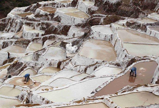 Workers collect salt from salt ponds at the Maras mines in Cuzco December 3, 2014. (Photo by Enrique Castro-Mendivil/Reuters)