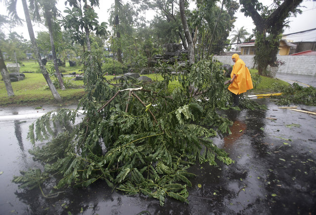 A policeman carries a tree branch that fell due to strong winds brought by Typhoon Hagupit in Legazpi, Albay province, eastern Philippines Sunday, December 7, 2014. (Photo by Aaron Favila/AP Photo)