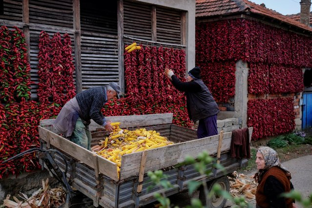 People work with corns as bunches of paprika hang on the walls of houses to dry in the village of Donja Lakosnica, Serbia October 6, 2016. (Photo by Marko Djurica/Reuters)