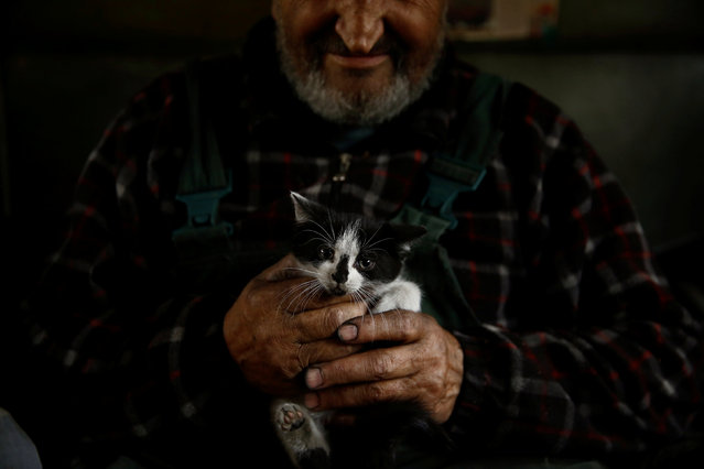 Charcoal burner Zygmunt Furdygiel holds his cats inside his hut at a charcoal making site in the forest of Bieszczady Mountains, near the village of Baligrod, Poland October 27, 2016. (Photo by Kacper Pempel/Reuters)