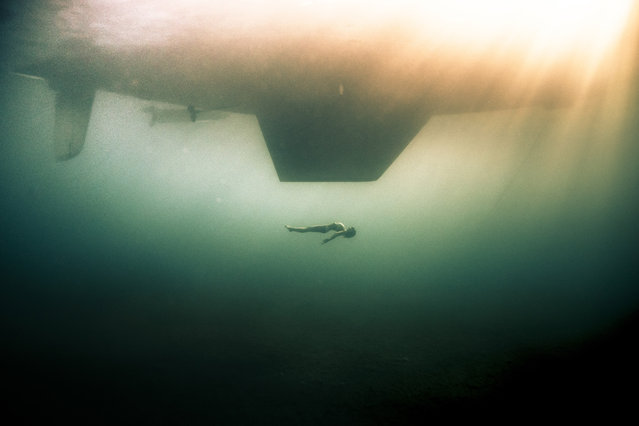 A free diver under the boat she is traveling on. (Photo by Alex Voyer/Caters News Agency)