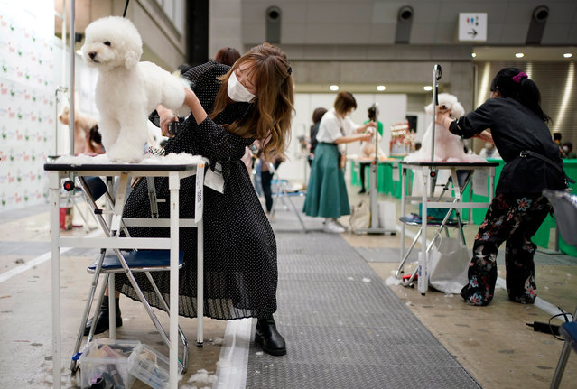"Dog groomers participate in a contest at the ""Interpets"" international pet fair in Tokyo, Japan, 01 April 2021. (Photo by Franck Robichon/EPA/EFE)"