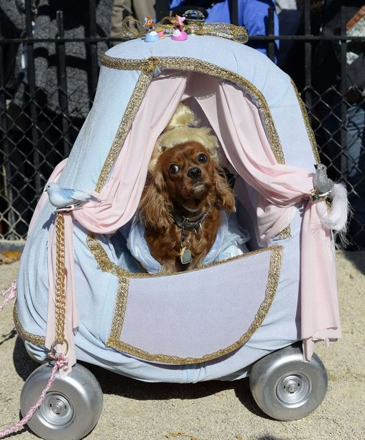 """A dog dressed as """"Cinderella"""" participates in Halloween Dog Parade in New York. (Photo by Timothy Clary/Getty Images)"""