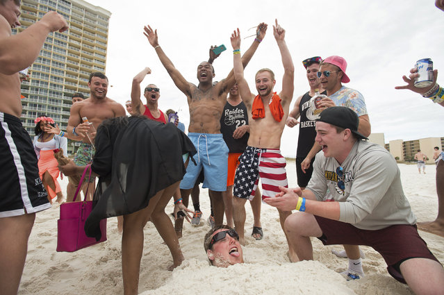 Buddies cheer as a girl stops to sit on Brandon Leonard of Cedar Rapids, Iowa, while he is buried in sand during spring break festivities in Panama City Beach, Florida March 13, 2015. (Photo by Michael Spooneybarger/Reuters)