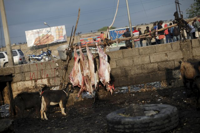 Dead and live goats are seen at La Saline slaughterhouse in Port-au-Prince, Haiti, March 19, 2015. (Photo by Andres Martinez Casares/Reuters)