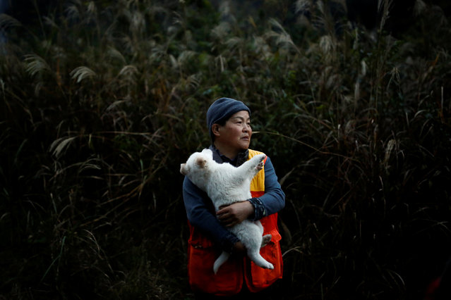 Hunter Yasuyo Kitagawa holds Chiro, the offspring of her hunting dog at her farm in Oi, Fukui Prefecture, Japan, November 18, 2016. (Photo by Thomas Peter/Reuters)