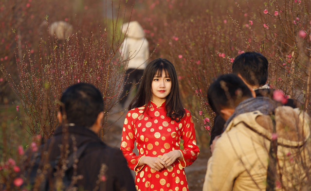 "A Vietnamese woman, wearing the traditional ""ao dai"" long dress, poses for photos along peach blossom flowers ahead of the Vietnamese ""Tet"" (Lunar New Year festival), in a field in Hanoi, Vietnam, February 2, 2016. (Photo by Reuters/Kham)"
