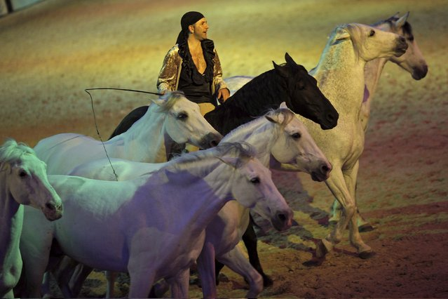 A man performs with horses during the Sacab Andalusian Horse Show in Coin, southern Spain, April 12, 2015. (Photo by Jon Nazca/Reuters)