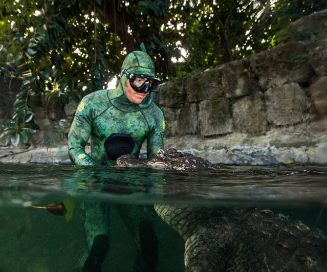 """The incredible photographs show the three alligators crowding around the man's head as they look directly at the camera and one even appears to sit on his lap whilst another reptile places a claw on his arm as it swims towards the surface. Photographs taken from above the surface show animal handler, Chris Gillette (29) from Fort Lauderdale, Florida, USA holding an alligator out of the water. The images of Chris were taken by Michael Dornellas at the Everglades Outpost Wildlife Rescue, Florida USA. """"People think of alligators as mindless killers but if you understand their behaviour it is possible to handle them in surprising ways, I wanted to show how calm and gentle these amazing creatures can be"""", said Chris. According to The Florida Fish and Wildlife Conservation Commission, there are an estimated 1.3 million alligators living in the state. Chris first started handling animals at the age of 15 and says that he has a passion for showing the friendlier side of creatures that are often perceived as dangerous. Here: Michael Dornellas took the snaps at the Everglades Outpost Wildlife Rescue. (Photo by Chris Gillette and Michael Dornellas/Mediadrumworld.com)"""