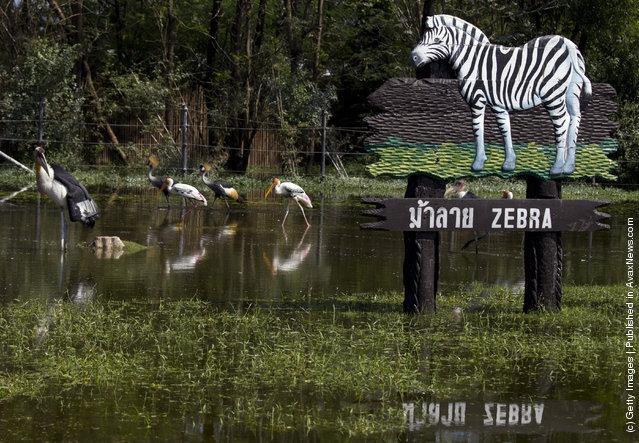 Flooded Safari Park located at Safari World in Bangkok, Thailand