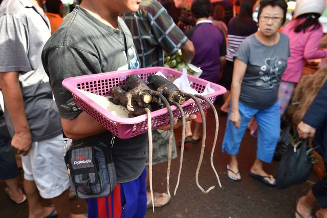 This picture taken on February 18, 2017 shows a food vendor offering grilled rats to customers in Tomohon market in northern Sulawesi, Indonesia. Authorities and activists are stepping up efforts to persuade villagers on Sulawesi island to stop consuming the critically endangered crested black macaques, one of many exotic creatures that form part of the local indigenous community' s diet. The macaque' s meat is prized by the ethnic Minahasan people, a largely Christian group in the world' s most populous Muslim- majority country, who have no reservation about eating exotic animals, unlike Indonesia' s Islamic communities. (Photo by Bay Ismoyo/AFP Photo)