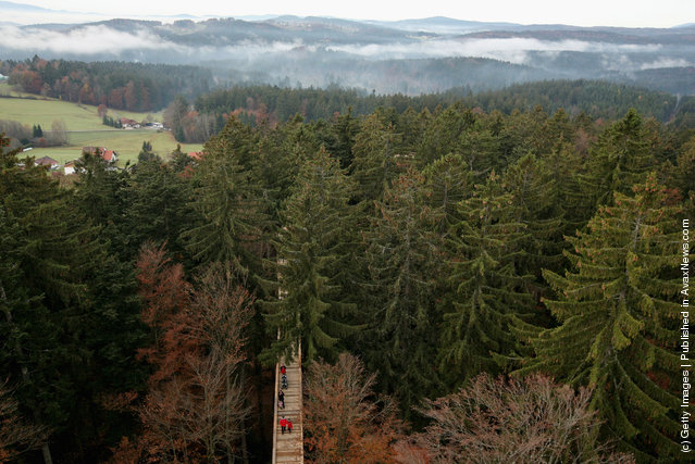 Visitors of the world's longest tree top walk between the trees of the Bavarian forest