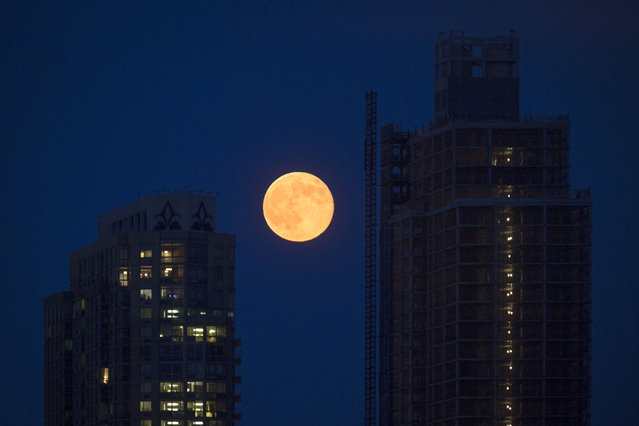 A perigee moon rises over the Queens borough of New York, Saturday, July 12, 2014. (Photo by John Minchillo/Associated Press)
