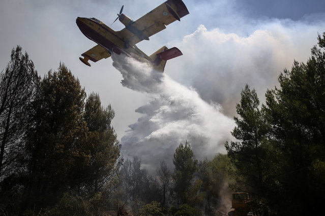 A firefighting airplane drops its load over a forest fire at Kalamos village, north of Athens, on Monday, August 14, 2017. A large wildfire north of Athens is threatening homes as it sweeps through pine forest for a second day, uncontained due to high winds. (Photo by Yorgos Karahalis/AP Photo)