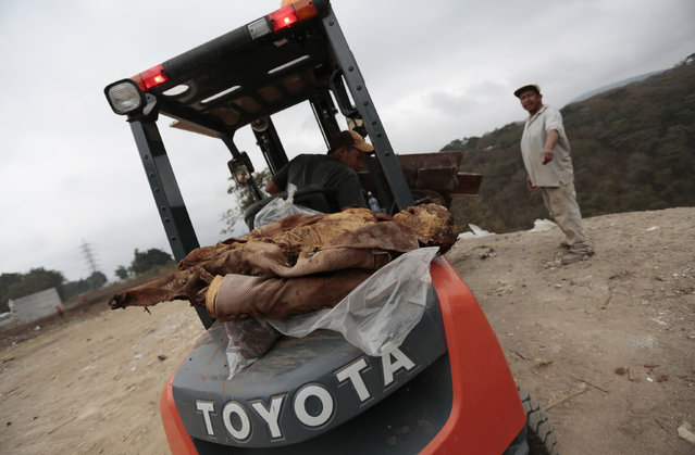 A worker drives a forklift with discarded coffins as a mummified corpse lies on the back at the Verbena cemetery in Guatemala City February 28, 2013. (Photo by Jorge Dan Lopez/Reuters)