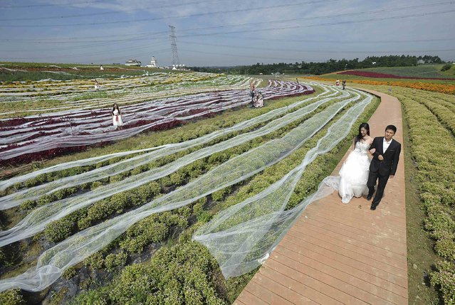 Staff members (R) dressed as newly-weds walk along a path as they display a 4100-meter-long wedding dress train trailed along shrubs, during a promotional event for a tourism valley in Chengdu, Sichuan province September 24, 2014. The long wedding dress train, which was 1.5-metre-wide, cost about 40,000 yuan (6,520 USD) and one month to make. The owner is planning to apply for the Guinness World Records, local media reported. (Photo by Reuters/Stringer)