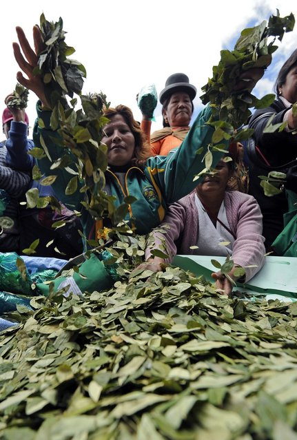 """Women throw coca leaves into the air during a celebration for the reincorporation of Bolivia to the UN Convention Against Illicit Traffic in Narcotic Drugs in La Paz on January 14, 2013. """"The coca leaf is not any more seen as cocaine (..), it is a victory of our identity"""" said Bolivian President Evo Morales. AFP PHOTO/Jorge Bernal        (Photo credit should read JORGE BERNAL/AFP/Getty Images)"""