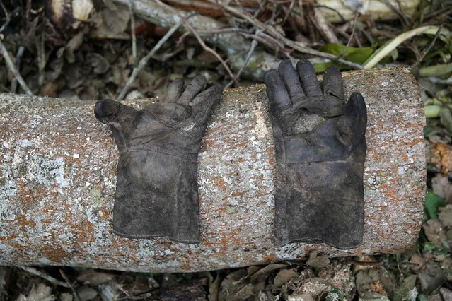 A labourer's gloves are seen on a log in an unreserved forest in Igede-Ekiti township, southwest Nigeria, August 19, 2014. (Photo by Akintunde Akinleye/Reuters)