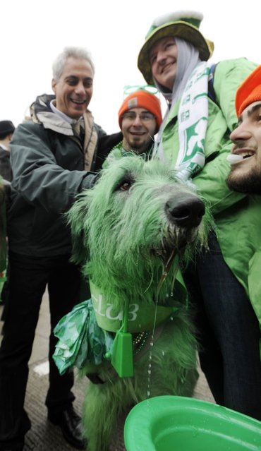 """Chicago Mayor Rahm Emanuel left, poses for a photo with """"Shamrock"""" the green dyed Irish Wolfhound and from left, Clancy Shanahan, Tony Shanahan and Cavan Shanahan before the St. Patrick's Day parade in Chicago, Saturday, March, 16, 2013. (Photo by Paul Beaty/AP Photo)"""