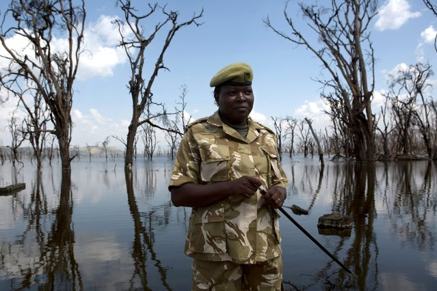 Deputy park warden Maurine Musimbi speaks to a Reuters journalist in front of damage caused by flooding at Lake Nakuru National Park, Kenya, August 18, 2015. (Photo by Joe Penney/Reuters)