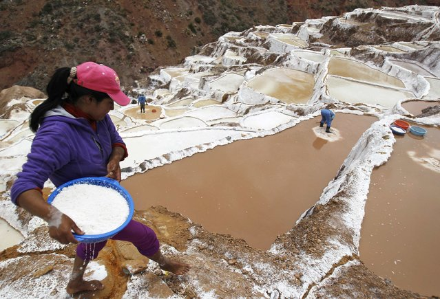 A worker carries washed salt after collecting it from a pond at the Maras mines in Cuzco December 3, 2014. (Photo by Enrique Castro-Mendivil/Reuters)