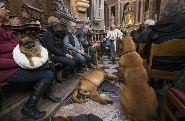 Dogs are seen among faithfuls during a religious service ahead of a blessing ceremony for animals at the Basilica of St Peter and Paul in Saint-Hubert, Belgium November 3, 2015. (Photo by Yves Herman/Reuters)