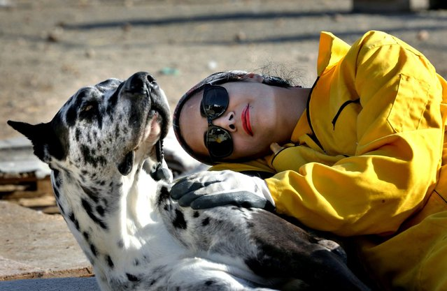 In this Friday, December 5, 2014 photo, Homa Rashid, a lawyer and volunteer at the Vafa Animal Shelter, rests with a dog, in the city of Hashtgerd 43 miles (73 kilometers) west of the capital Tehran, Iran. (Photo by Vahid Salemi/AP Photo)