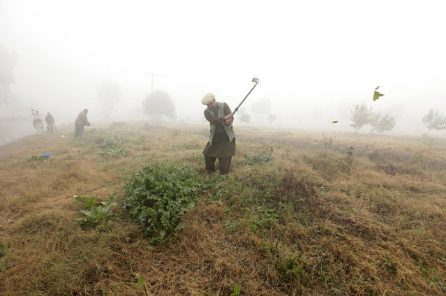 Capital Development Authority (CDA) workers cut the overgrown grass and weeds along a road amid dense fog on a cold winter morning in Islamabad, Pakistan, January 13, 2016. (Photo by Faisal Mahmood/Reuters)