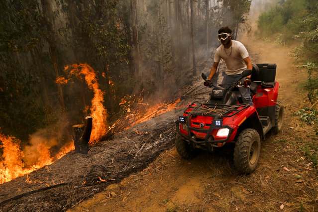 A man drives past a wildfire blaze in the Florida community of Concepcion, Chile, Friday, January 27, 2017. Fires have been raging in central and southern Chile, fanned by strong winds, hot temperatures and a prolonged drought. Emergency services have battled the flames non-stop for days with thousands of firefighters on the ground and helicopters and small airplanes in the air. (Photo by Esteban Felix/AP Photo)