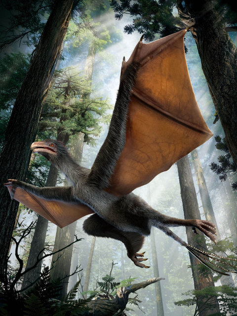 "This illustration provided by Dinostar Co. Ltd. shows the dinosaur, Yi qi, which is Mandarin for ""strange wing"". Dinosaurs normally used feathers for flight, but the newly discovered creature evidently had wings made of skin instead, like a bat's, described in a paper released by the journal Nature on Wednesday, April 29, 2015. Though it's not clear whether they flapped or merely let the creature glide. (Photo by Dinostar Co. Ltd. via AP Photo)"