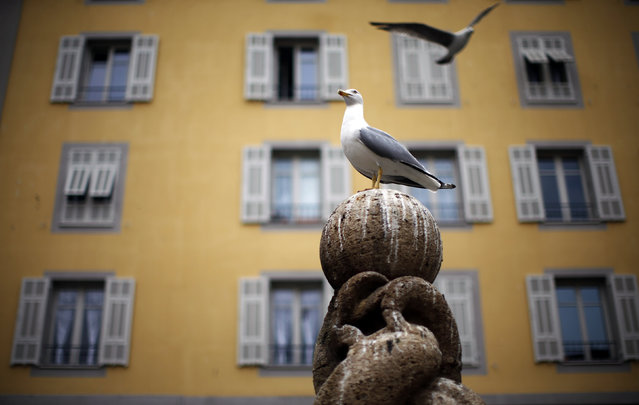 Seagulls are seen in the old city of Nice, France, March 30, 2016. (Photo by Eric Gaillard/Reuters)