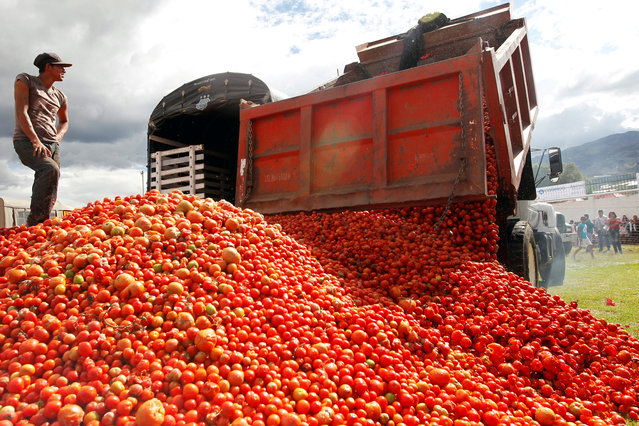 "A man waits while they unload a truck of tomatoes before the ""Tomatina"" (tomato fight) in Sutamarchan province in Boyaca, Colombia on June 2, 2019. (Photo by Luisa Gonzalez/Reuters)"