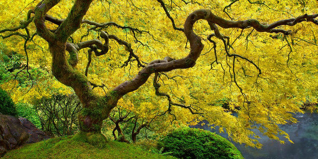 A day in the Japanese Gardens. Portland, Oregon. (Photo by Craig Bill/Smithsonian.com)