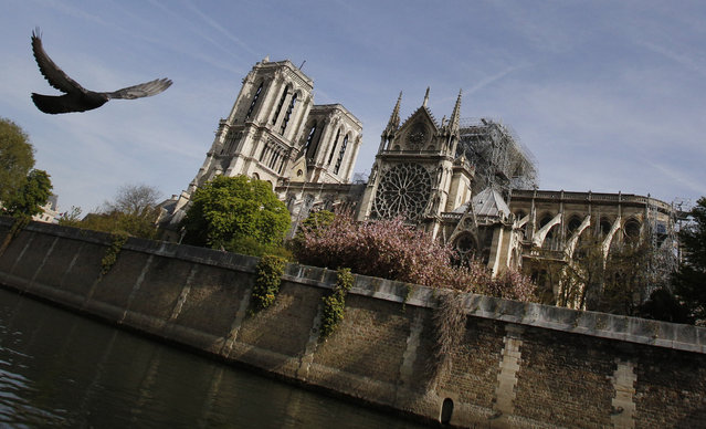 A bird flies past the Notre Dame Cathedral in Paris, Thursday, April 18, 2019. Nearly $1 billion has already poured in from ordinary worshippers and high-powered magnates around the world to restore Notre Dame Cathedral in Paris after a massive fire. (Photo by Christophe Ena/AP Photo)