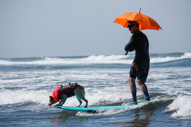 "A man and his dog ride a wave together as they compete in the 14th annual Helen Woodward Animal Center ""Surf-A-Thon"" where more than 70 dogs competed in five different weight classes for ""Top Surf Dog 2019"" in Del Mar, California, U.S., September 8, 2019. (Photo by Mike Blake/Reuters)"