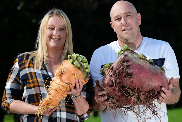 Laura and Chris Marriott pose during a press photo call with their winning carrot at 3.8kg and Beetroot at 17.840kg following judging for the giant vegetable competition at the Harrogate Autumn Flower Show on September 13, 2019 in Harrogate, England. (Photo by Ian Forsyth/Getty Images)