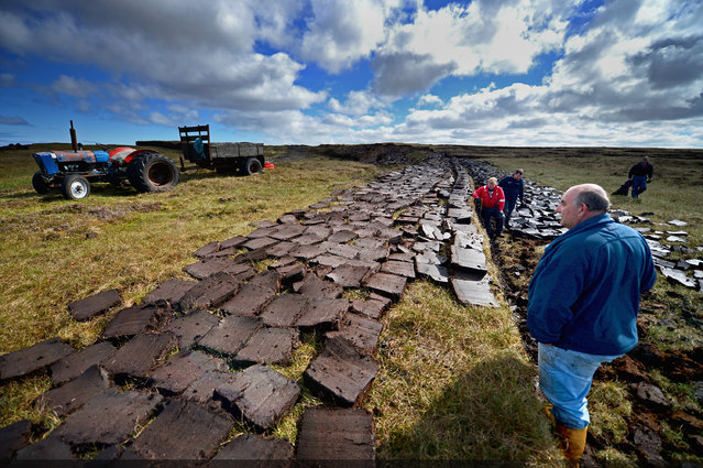 Dan Smith, Angus Smith, Callum Mckenzie and Alastair Maclean extract peat from a moor near the village of Cross on May 13, 2014 in Lewis, Scotland. The tradition of peat cutting has seen a revival over recent years in the Outer Hebrides as residents conscious of rising fuel cost are using it to run their central heating and stove fires. (Photo by Jeff J. Mitchell/Getty Images)