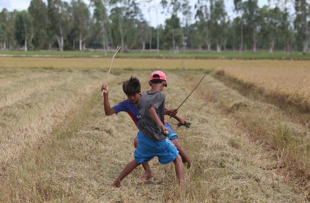 Cambodian children try to kill rats with sticks in a rice field in Takeo province, south of Phnom Penh August 11, 2015. The many children catching rats in this area say these rodents have become an increasingly popular free food in their area. (Photo by Samrang Pring/Reuters)