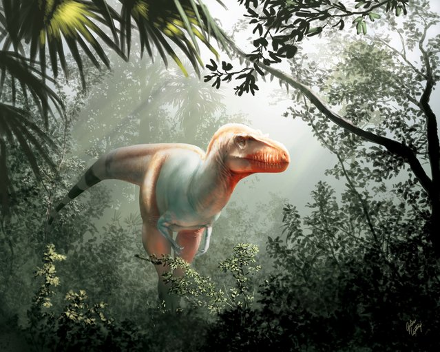 A handout photo made available on February 10, 2020 by the University of Calgary and Royal Tyrrell Museum shows an artist's impression of a Thanatotheristes degrootorum, a newly-discovered species of T-Rex. Experts think the species was wiped out 79million years ago by the much larger T-Rex, which grew up to 40ft and tipped the scales at nine tons. Fragments of the reaper's skull were unearthed next to a river in Alberta, Canada, by farmer John De Groot while hiking with his family in 2010. The fossils were stored in a drawer at a museum for years, until a University of Calgary researcher first reviewed the find two years ago. (Photo by Julius Csotonyi/The University of Calgary and Royal Tyrrell Museum/AFP Photo)