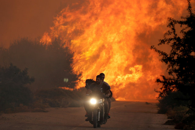 Two men and a dog on a motorbike flee a wildfire burning near the village of Varnavas, north of Athens, Greece, August 14, 2017. (Photo by Alkis Konstantinidis/Reuters)