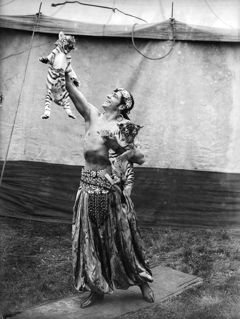 Togare playing with two tiger cubs at the Bertram Mills Circus in Hull, August 1934.