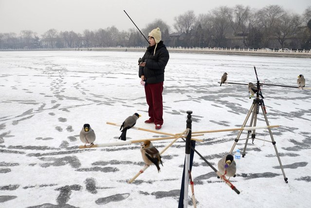 A Chinese man plays with his pet bird on a frozen lake in Beijing on December 19, 2012. (Photo by Wang Zhao/AFP Photo)