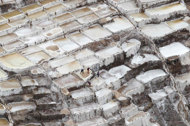 Workers collect salt from a salt pond at the Maras mines in Cuzco December 3, 2014. (Photo by Enrique Castro-Mendivil/Reuters)