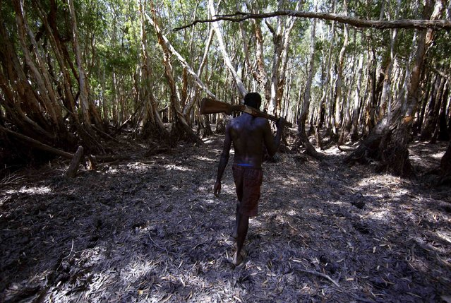 """Australian Aboriginal hunter Roy Gaykamangu of the Yolngu people carries a shotgun over his shoulder as he walks through a native paperbark tree forest near the """"out station"""" of Yathalamarra, located on the outksirts of the community of Ramingining in East Arnhem Land November 22, 2014. (Photo by David Gray/Reuters)"""
