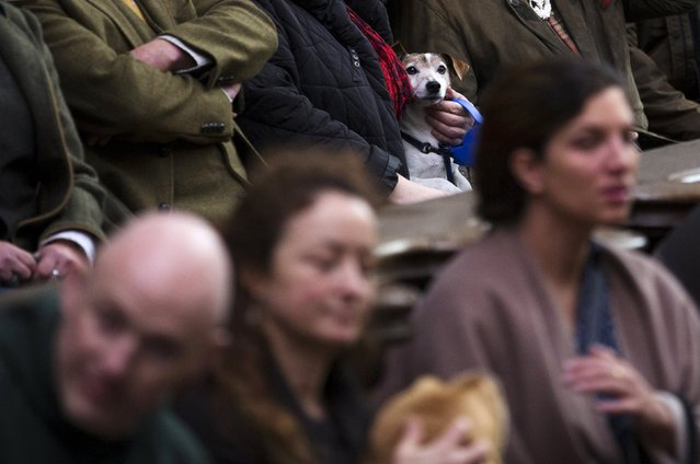 A dog is seen among faithfuls during a religious service ahead of a blessing ceremony for animals at the Basilica of St Peter and Paul in Saint-Hubert, Belgium November 3, 2015. (Photo by Yves Herman/Reuters)